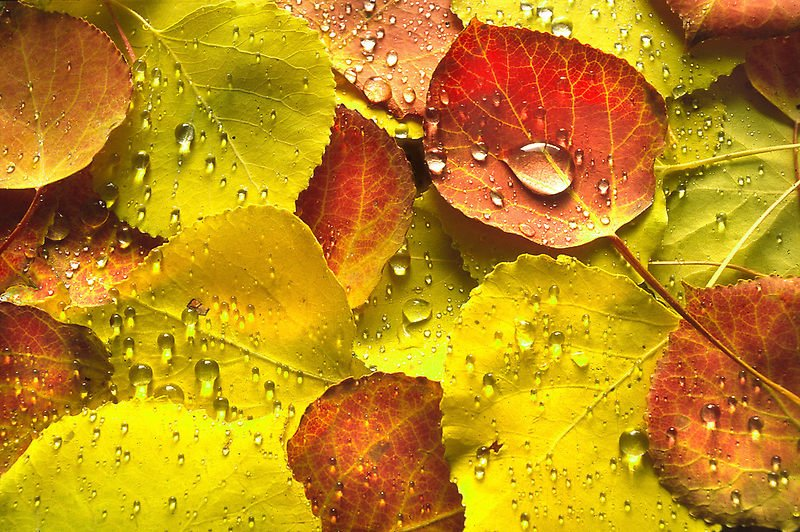 feuilleslautomne.jpg